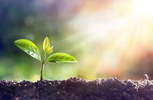 Komeco is producent van gecomposteerde organische meststoffen die bijdragen aan een rijke bodem, betere gewasgroei en daarmee een duurzame wereld.