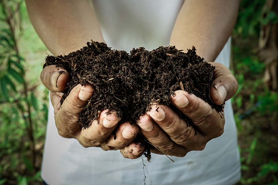 The soil contains all nutrients which offers the foundation for crop and plant growth. A richer soil starts with the organic fertilizers of Komeco!
