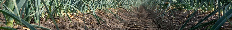 De bodem is de basis voor de groei van gewassen en planten | Komeco