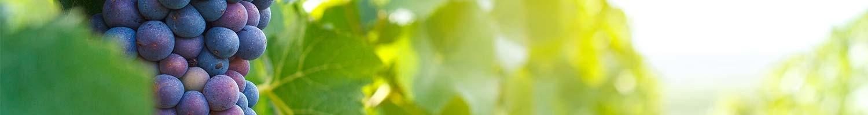 Door de bodem van de juiste voedingsstoffen te voorzien, heeft dit in een later stadium een positief effect op de groei van de plant.