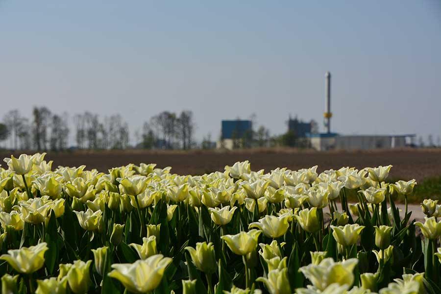 Komeco in Flevoland tijdens tulpenroute