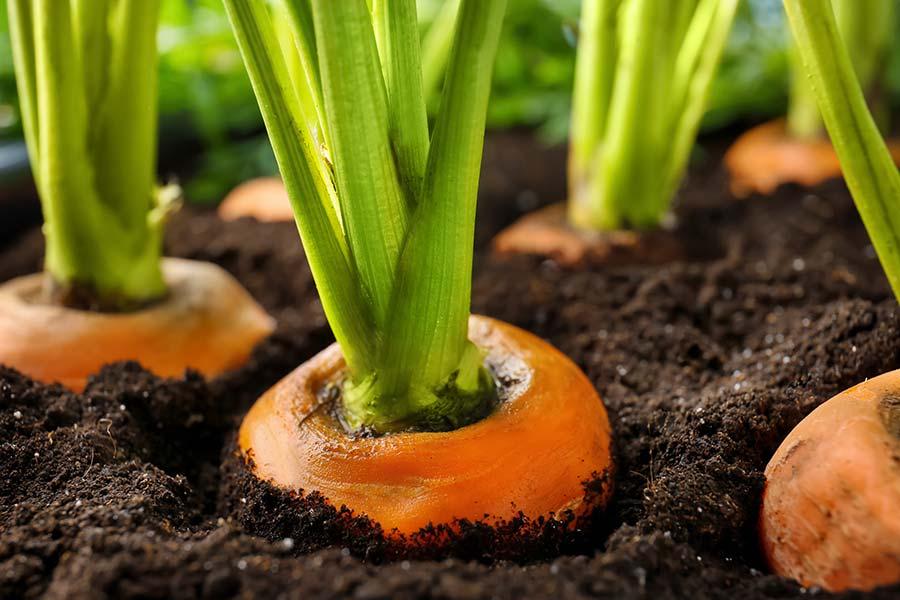 FERTISOL est la nutrition optimale du sol dans l'agriculture et le jardin