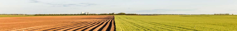 La nutrition du sol est essentielle pour la continuité du sol et la vie du sol. Utilisez les engrais organique pour un sol sain et fertile.
