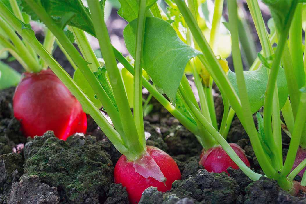 A healthy soil is the foundation for crops and plants to grow in an optimal way.