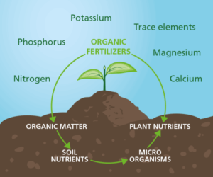 A healthy soil leads to better plant growth and higher yields. A richer soil starts with the organic fertilizers of Komeco!