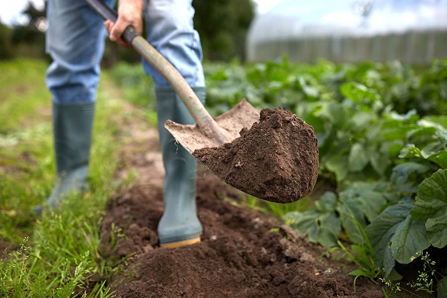 Organic fertilizers perfectly suitable for home gardening