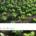 part-2-npk-in-organic-fertilizers-www