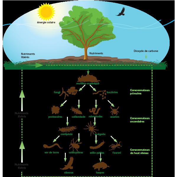 Le sol est la base de la croissance des cultures et des plantes et très important pour l'agriculture. Un sol sain commence avec les engrais organique de Komeco