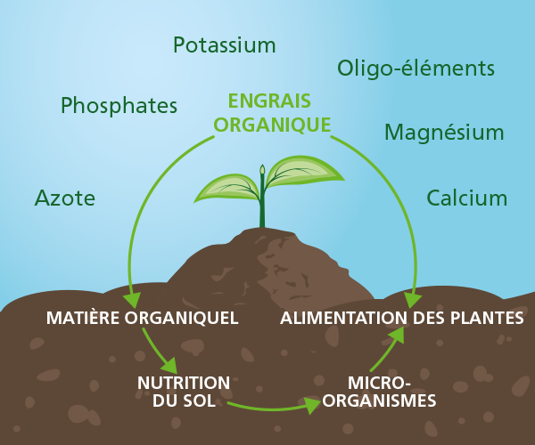 L'alimentation des plantes via les engrais organiques. Nourrissez le sol et les plantes.