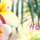 different-opening-hours-spring-holiday-banner