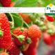 Afbeeldingen-posts-nieuwsberichten-voedingsstoffen-2020