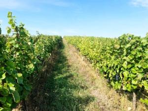 resultaten-kroatië-wijngaard